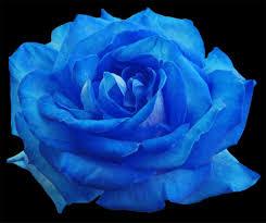 इन में से चुनें किसी एक गुलाब को